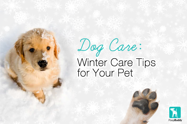 dog care winter care tips for your pet